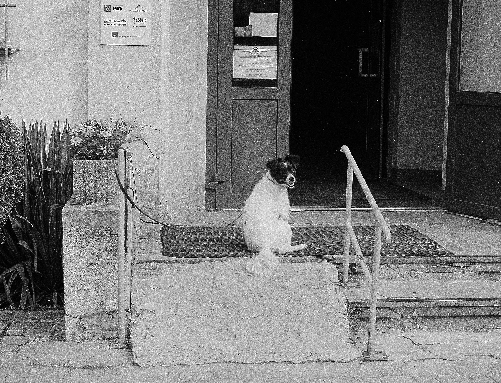 Waiting Dogs Natalia Poniatowska